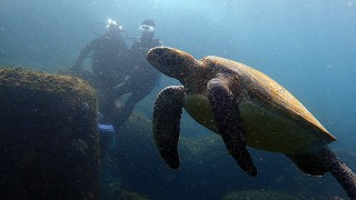 小雨パラつく八丈島、穏やかなタイドプールと八重根で体験ダイビング