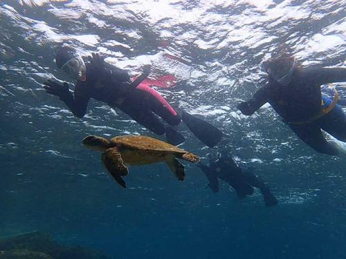 小さいカメは逃げずにのんびり泳いでいたり