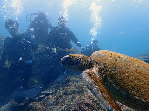 のんびり泳ぐアオウミガメ
