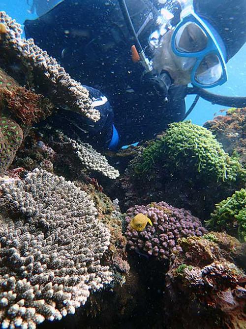 サンゴの隙間にハコフグの子ども