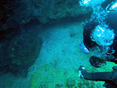アオウミガメは今日は隙間で休憩中で