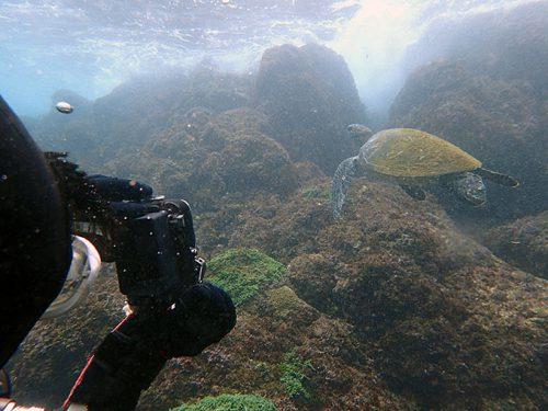 泳ぐカメを撮ってもみたり