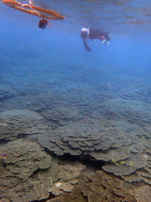 サンゴ広がる底土の手前