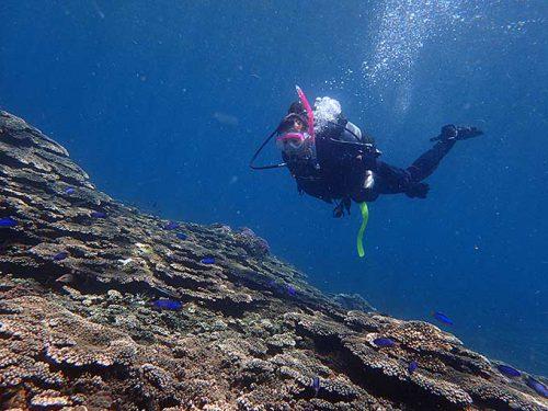 サンゴの上にはソラスズメダイがたくさんいたり