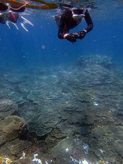 サンゴの広がる底土の海でシュノーケリング