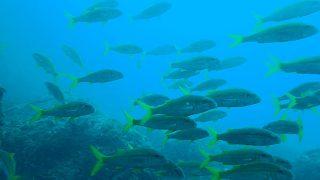 青空すでに夏っぽい八丈島、穏やかだったナズマドでダイビング
