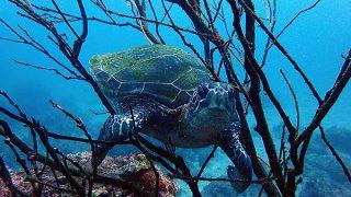 気持ちの良い青空続く八丈島、うっすらうねりも入る八重根でダイビング