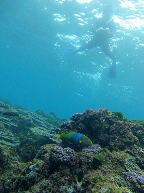 ヤマブキベラとか綺麗な魚もたくさん見られ