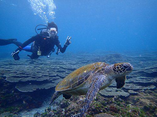 アオウミガメと一緒にちょろっと泳いでみたり