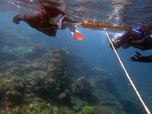 サンゴの広がるところを目指して泳いでいって