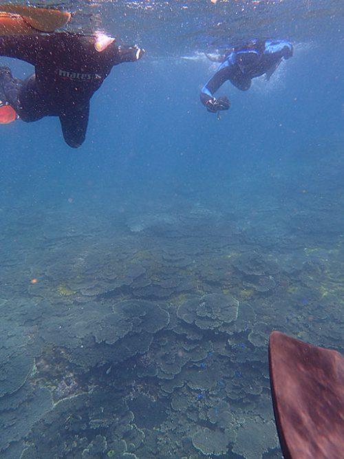 サンゴを見つつカメも探していきまして