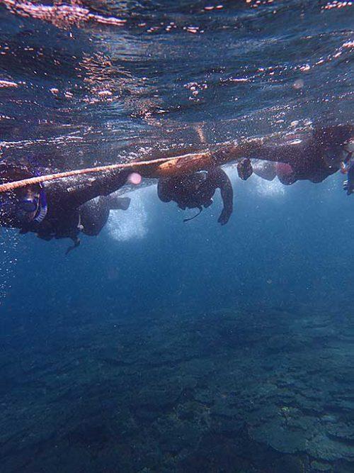 サンゴのところへ泳いでいって