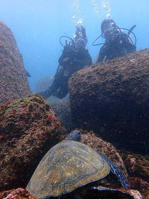 岩の間で休憩中のアオウミガメ