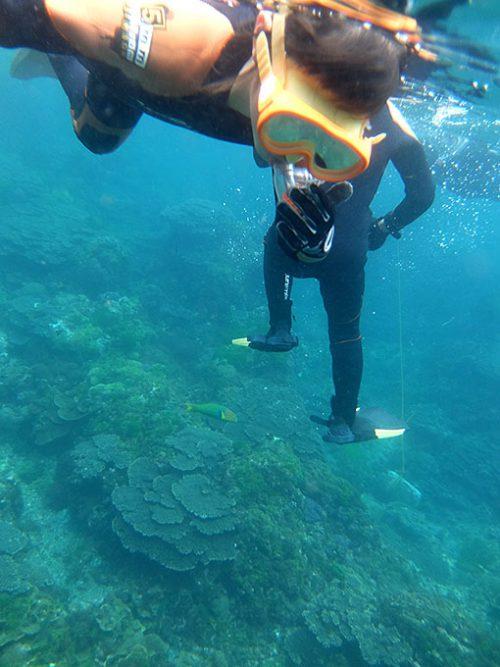 魚を見ながらサンゴの海で楽しんで