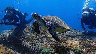 爽やかな青空広がる八丈島、八重根とナズマドで体験ダイビング