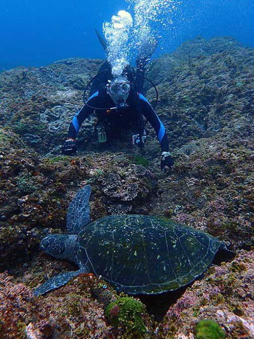 大きなカメは沖の根上で休憩中で