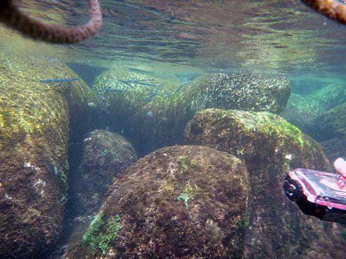 水面付近の魚も見つつ