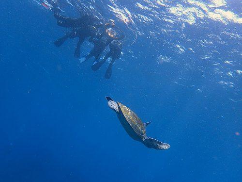 泳ぐカメを上から見てみて