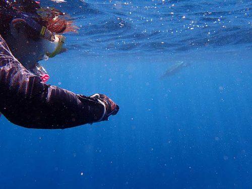 水面付近に上がってきてたアオウミガメ