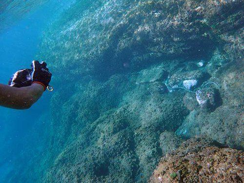 にょろんとモヨウモンガラドオシが泳いでいたり