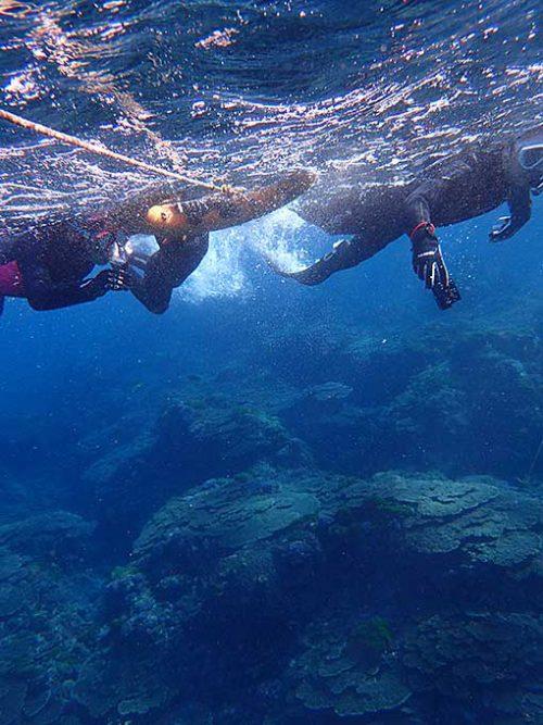 魚を見ながらサンゴの広がるとこまで行って