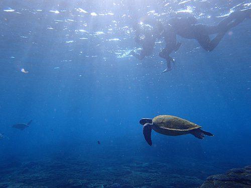底土の海でカメと一緒にシュノーケリング