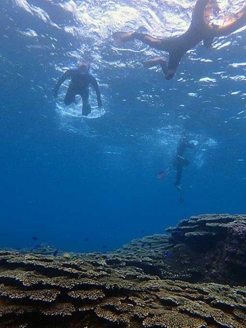 サンゴの上には綺麗な魚もたくさんいたり