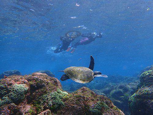 底土でカメと一緒にシュノーケリング