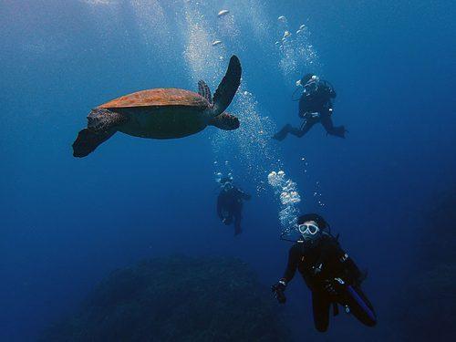 中層付近でのんびりしてたアオウミガメ
