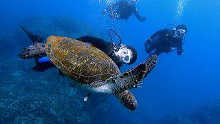 青空すっかり夏らしい八丈島、とっても穏やかな八重根で体験ダイビング