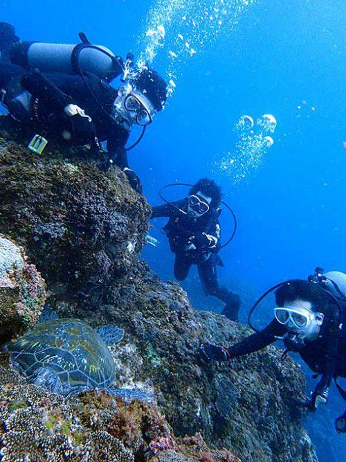 岩の隙間で休憩していたアオウミガメも見てみたり