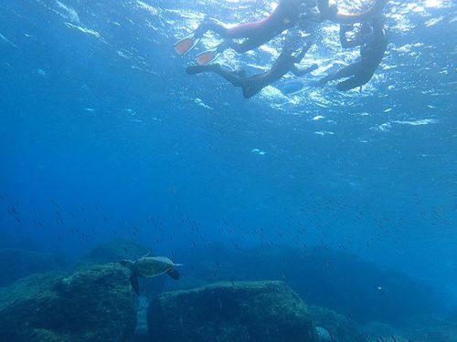 綺麗な海でアオウミガメを見てみたり