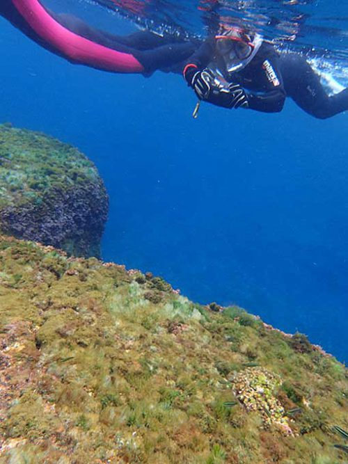 浅場の岩の上にはニシキベラやコガシラベラがいたりして