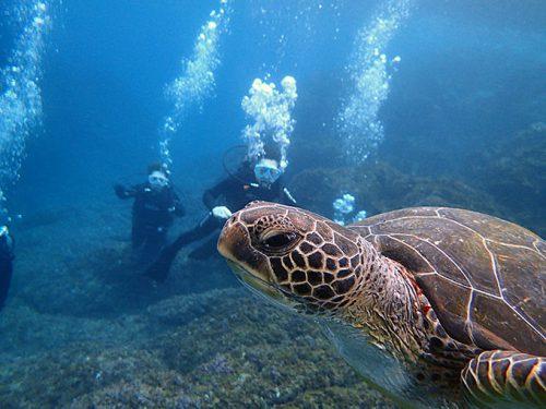 今日も体験ダイビングでウミガメ見たり