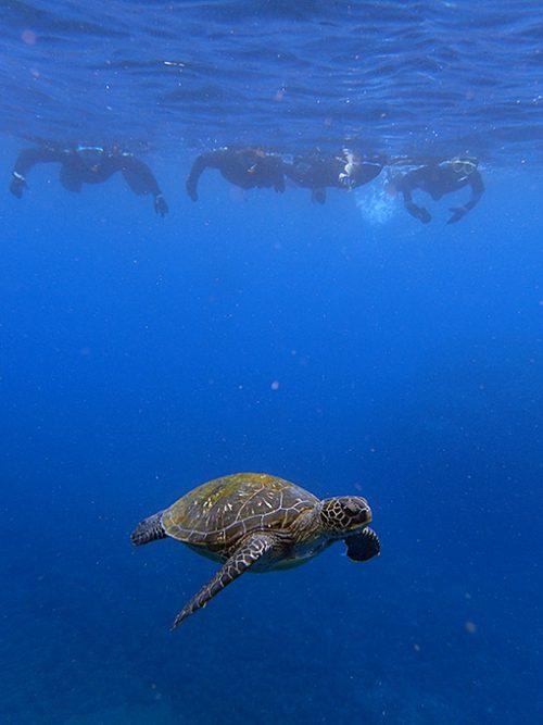 今日も八重根の海でカメと一緒にシュノーケリング