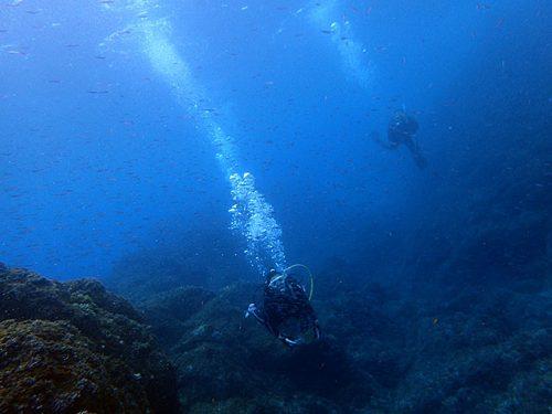 キビナゴたくさん夏の海