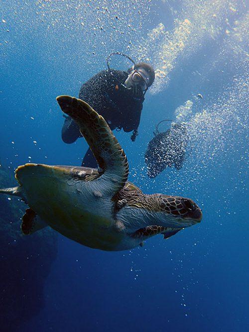 体験ダイビングでカメと一緒に泳げたり