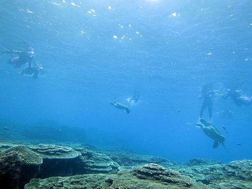 何匹か集まってたアオウミガメ