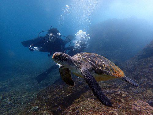うねりに負けず体験ダイビングでアオウミガメを見てみたり