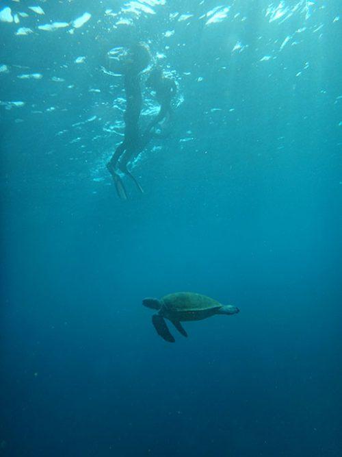 みんなの下をアオウミガメが泳いでいたり