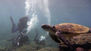 日差しも強く暑くもあった八丈島、うねりはあるが底土で体験ダイビング