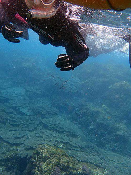 サンゴの広がるちょっと沖まで泳いでいって