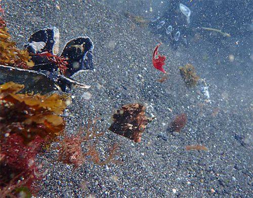 ゴミに紛れる魚もいたり