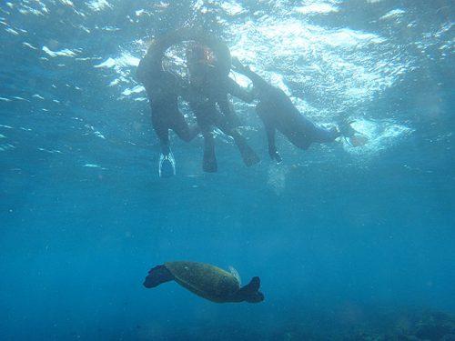 みんなの下にはアオウミガメが泳いでいたり