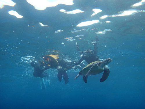 水面付近に上がってきていたアオウミガメを近くで見たり