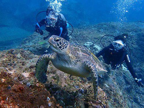 体験ダイビングでカメと一緒に泳いでみたり