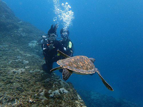 潜ってすぐにアオウミガメが泳いでいたり