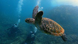 青空広がる八丈島、うねりも強まる八重根で体験ダイビング