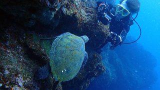 時折日差しも差し込む八丈島、うねり残りの底土で体験ダイビング