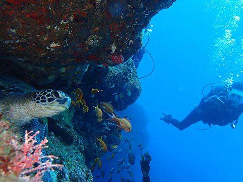 岩の隙間で休憩中だった小さいアオウミガメ